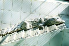 Κροκόδειλος του Νείλου Στοκ φωτογραφία με δικαίωμα ελεύθερης χρήσης