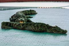 Κροκόδειλος Στοκ εικόνες με δικαίωμα ελεύθερης χρήσης
