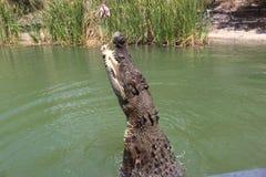 Κροκόδειλος Στοκ Φωτογραφία