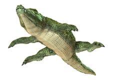 Κροκόδειλος Στοκ Εικόνα