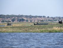 Κρουαζιέρα ποταμών στο εθνικό πάρκο Chobe Στοκ Εικόνες