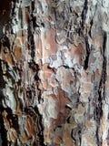 Κρούστα, incrustation, φλοιός, φελλός στοκ εικόνα με δικαίωμα ελεύθερης χρήσης