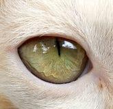 Κρυμμένα μάτια Στοκ φωτογραφία με δικαίωμα ελεύθερης χρήσης