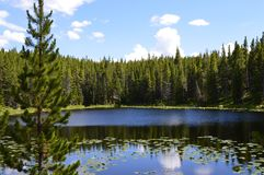 Κρυμμένη γαλήνια λίμνη στο εθνικό δρυμός Bighorn στοκ εικόνες