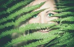 Κρυμμένη σμάραγδος Στοκ φωτογραφίες με δικαίωμα ελεύθερης χρήσης
