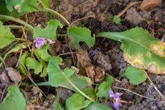 Κρυμμένος βάτραχος στο μπάλωμα κήπων στοκ εικόνες με δικαίωμα ελεύθερης χρήσης