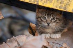 κρυμμένο γατάκι Στοκ Φωτογραφίες