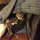 κρυμμένο γατάκι Στοκ εικόνα με δικαίωμα ελεύθερης χρήσης