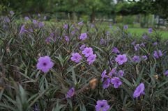 Κρυμμένο πορφυρό λουλούδι στο αμυδρό φως στοκ φωτογραφίες με δικαίωμα ελεύθερης χρήσης