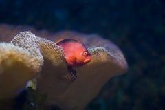 κρυφοκοίταγμα ψαριών Στοκ Εικόνα