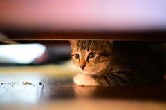 Κρυφοκοιτάξτε ένα γατάκι της Boo Στοκ Εικόνες