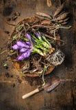 Κρόκος και ρίζες των λουλουδιών στο κύπελλο με τη σέσουλα αγροτικό σε ξύλινο Στοκ Φωτογραφίες