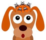 Κρότωνες σκυλιών Στοκ φωτογραφία με δικαίωμα ελεύθερης χρήσης