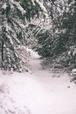 κρύα ημέρα στο χιονώδες χειμερινό δάσος - εκλεκτής ποιότητας επίδραση ταινιών Στοκ φωτογραφίες με δικαίωμα ελεύθερης χρήσης