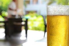 Κρύα μπύρα Στοκ Φωτογραφίες