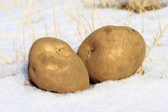 κρύα πατάτα Στοκ εικόνα με δικαίωμα ελεύθερης χρήσης
