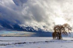 Κρύα χειμερινή θύελλα Στοκ Φωτογραφίες