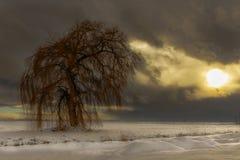 Κρύα χειμερινή ιτιά Στοκ εικόνα με δικαίωμα ελεύθερης χρήσης