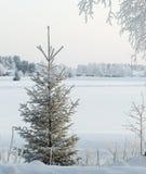 Κρύα χιονώδης χειμερινή ημέρα με το sprunce Στοκ φωτογραφία με δικαίωμα ελεύθερης χρήσης