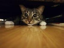 Κρύβοντας γάτα κάτω από τον καναπέ Στοκ Εικόνες