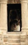 Κρύβοντας γάτα Στοκ Εικόνα