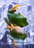 κρύος βάτραχος Στοκ φωτογραφίες με δικαίωμα ελεύθερης χρήσης