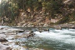 Κρύος ποταμός βουνών Ουκρανία Στοκ Εικόνα