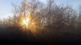 κρύος χειμώνας πρωινού Ήλιος μέσω των δέντρων και της ομίχλης Στοκ Εικόνες