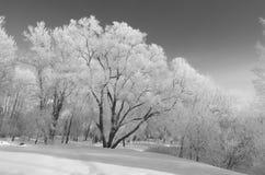 Κρύος χειμώνας στα ξύλα στοκ φωτογραφία με δικαίωμα ελεύθερης χρήσης