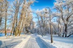 Κρύος χειμώνας στα ξύλα στοκ φωτογραφία