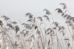 κρύος χειμώνας Στοκ Εικόνες