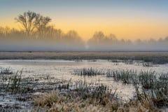 Κρύο έλος στοκ φωτογραφία με δικαίωμα ελεύθερης χρήσης