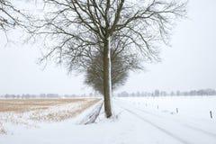 κρύο δέντρο Στοκ Εικόνα