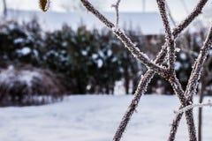 Κρύο δημιουργίας φουσκαλών Στοκ Εικόνα
