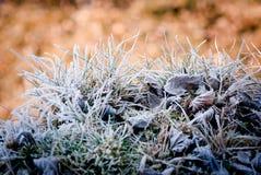 κρύο θερμό στοκ φωτογραφία με δικαίωμα ελεύθερης χρήσης
