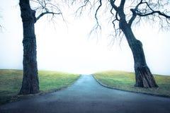 Κρύο μονοπάτι με τα δέντρα στοκ εικόνα