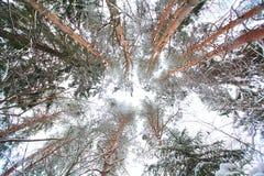 Κρύο χειμερινό δασικό τοπίο χιονώδες Στοκ Εικόνες