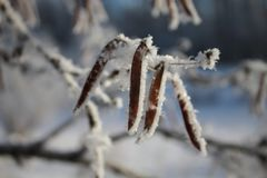 Κρύσταλλα χιονιού στις εγκαταστάσεις στοκ φωτογραφία με δικαίωμα ελεύθερης χρήσης