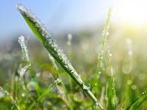 Κρύσταλλα πάγου και πτώσεις δροσιάς στην πράσινη χλόη Στοκ Εικόνες