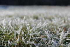 Κρύσταλλα πάγου στις λεπίδες χλόης - κινηματογράφηση σε πρώτο πλάνο Στοκ Φωτογραφία