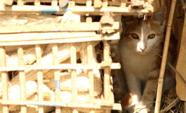 Κρύψιμο γατών από τον ήλιο Στοκ εικόνες με δικαίωμα ελεύθερης χρήσης