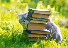 Κρύψιμο γατών πίσω από έναν σωρό των βιβλίων στοκ φωτογραφία με δικαίωμα ελεύθερης χρήσης