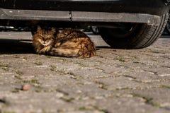 Κρύψιμο γατών Στοκ φωτογραφίες με δικαίωμα ελεύθερης χρήσης