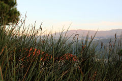 Κρύψιμο στους θάμνους στο Λίβανο Mtein Στοκ Φωτογραφία