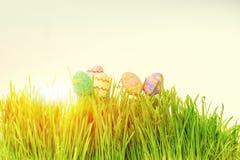 κρύψιμο χλόης αυγών Πάσχας Στοκ Εικόνες
