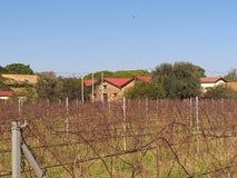 Κτήμα κρασιού Mercouri στοκ φωτογραφίες με δικαίωμα ελεύθερης χρήσης