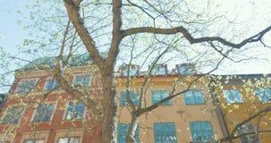 Κτήρια και δέντρα στη Στοκχόλμη, Σουηδία απόθεμα βίντεο