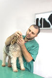 κτηνίατρος γιατρών Στοκ φωτογραφίες με δικαίωμα ελεύθερης χρήσης
