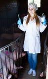 Κτηνίατρος γυναικών στο χοιροστάσιο Στοκ Εικόνα