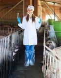 Κτηνίατρος γυναικών στο χοιροστάσιο Στοκ φωτογραφίες με δικαίωμα ελεύθερης χρήσης